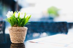 White tulips in flowerpot. White tulips flower in flowerpot on the table royalty free stock photography