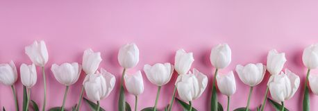 White tulips flowers over light pink background. Greeting card or wedding invitation. Flat lay, top view, copy space royalty free stock photography