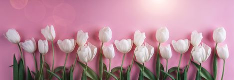 White tulips flowers over light pink background. Greeting card or wedding invitation. Flat lay. Top view, copy space. Wide composition royalty free stock photography