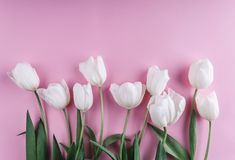 White tulips flowers over light pink background. Greeting card or wedding invitation. Flat lay, top view, copy space stock images