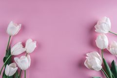 White tulips flowers over light pink background. Greeting card or wedding invitation. Flat lay, top view, copy space royalty free stock photo