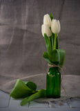 White tulips in  green glass bottle Royalty Free Stock Photography