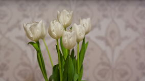 White Tulips at home. A bouquet of white tulips stock video