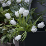 White tulips on kitchen background Stock Images