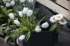White tulips on kitchen background Royalty Free Stock Photos