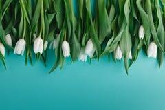 White tulips lay in row on plain background Stock Photos