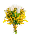White tulips with a mimosa Stock Photo