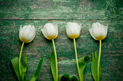 White tulips over shabby green wooden table Royalty Free Stock Photography
