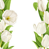 White tulips realistic background Royalty Free Stock Photos