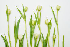 White tulips settled over white flat lay Stock Photo