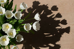 White tulips in the sun Royalty Free Stock Photography