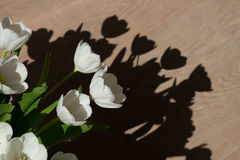 White tulips in the sun Stock Images
