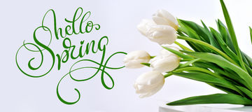 White Tulips and text Hello Spring. Calligraphy lettering.  stock photo