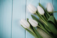 White tulips on turquoise background. Spring Letter and Tulips Stock Image