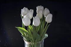 White tulips Royalty Free Stock Photos