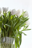 White tulips in a vase Royalty Free Stock Photo