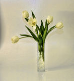 White tulips vase arrangement Stock Image