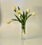 White tulips vase arrangement stock image