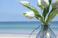 White tulips in vase at beach Royalty Free Stock Photography