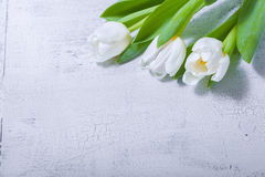 White tulips on wooden table. The bunch of white tulips on wooden table Stock Photos