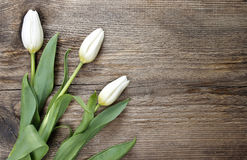 White tulips on wooden table Stock Images