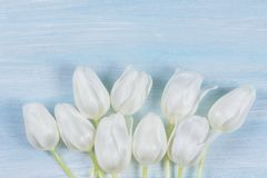 White tulips on a wooden table. Top view Stock Photos