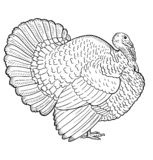 White turkey, illustration sketch, turkey isolated vector illustration