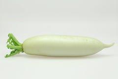 White turnip Royalty Free Stock Photo