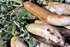 White turnip royalty free stock photography