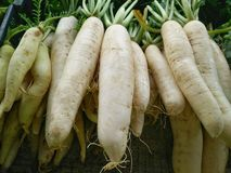 White turnips Stock Photography