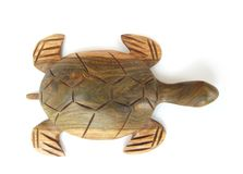 White turtle. Turtle isolated on a white back Stock Image