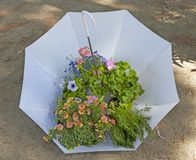 White umbrella with flowers and plants stock images