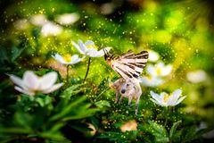 White unicorn with butterfly wings on flower. White fairy unicorn with butterfly wings on blooming anemone flower in spring forest. Realistic fairytale magic Royalty Free Stock Photo