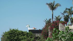 White unicorn on the edge of a private villa pool. Summer time stock video