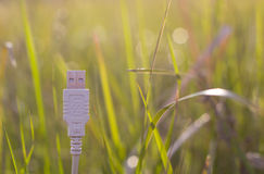 White USB cable on grass - green technology Stock Photo