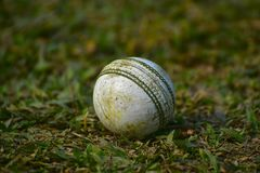 Cricket ball match game ball kookaburra stock. The beautiful used white cricket ball with green grass background stock photograph stock photography