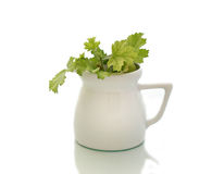 White vase. With green plants Stock Images