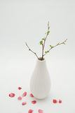 White vase with budding branch Stock Photos