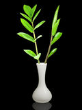 White vase with green plants Stock Image