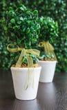 Vase. White vase with green tree  on green background Stock Photo