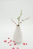 White Vase With Budding Branch Stock Photos