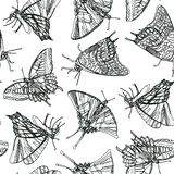 White pattern with black butterfly royalty free illustration