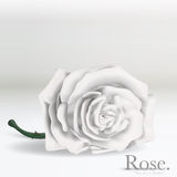 White Vector Rose flower on background. Stem and thorns, illustrated with Illustrator CS and EPS10. Vector with transparency Royalty Free Stock Photo