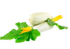 White vegetable Stock Photography