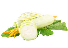 White vegetable marrow Royalty Free Stock Photo