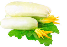 White vegetable marrow on white background. Royalty Free Stock Image