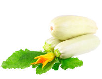 White vegetable marrow on white background. Stock Photos