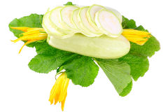 White vegetable marrow on white background. Stock Images