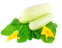 White vegetable marrow on white background. Royalty Free Stock Photography