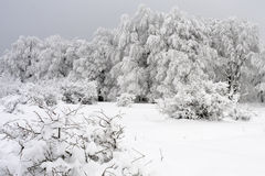 White vegetation in winter season Stock Photo
